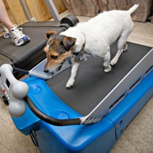 3 Dog Treadmill