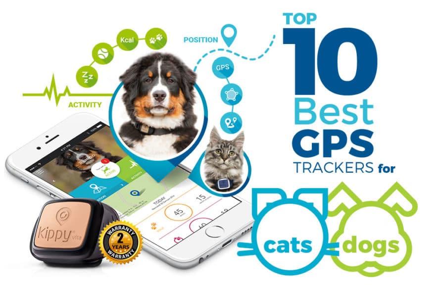 Best Pet Tracker